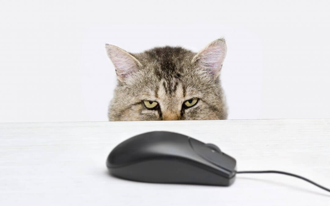 Cat hunts a computer mouse representing PowerPoint templates